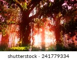 mysterious deep jungle in the... | Shutterstock . vector #241779334