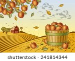 apple harvest landscape. fully... | Shutterstock .eps vector #241814344