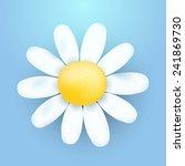 Vector Chamomile Flower