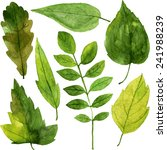 Set Of Green Leaves Drawing By...