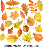 Set Of Autumn Leaves Drawing B...