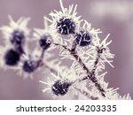 Blueberry Twigs Under Fluffy...