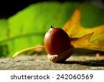 beautiful oaks under a huge oak ... | Shutterstock . vector #242060569