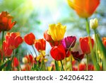 beautiful spring flowers | Shutterstock . vector #24206422