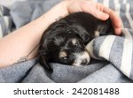 Tiny Puppy Sleeping On Bed