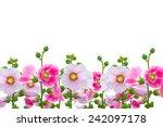 Flowers In The Garden Flowers...
