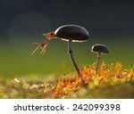 Weaver Ant Want To Jump From A...