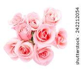 pink rose flower on white... | Shutterstock . vector #242212054