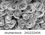 rose flower bouquet  black and... | Shutterstock . vector #242222434
