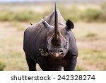Portrait Of Black Rhino Karanj...