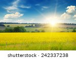 field  sunrise and blue sky | Shutterstock . vector #242337238
