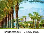 palms road coachella valley.... | Shutterstock . vector #242371033