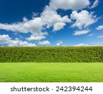 hedge with sky and grass  | Shutterstock . vector #242394244