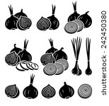 onion set. vector | Shutterstock .eps vector #242450380