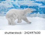 young polar bear playing in snow | Shutterstock . vector #242497630