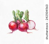 Red Radishes. Watercolor...