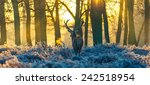 red deer | Shutterstock . vector #242518954