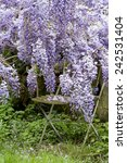 secret garden with wysteria and ... | Shutterstock . vector #242531404