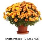 A Pot Of Beautiful Orange...