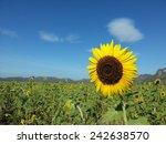 Beautiful Sunflower In...