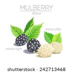 mulberry whiite and black...