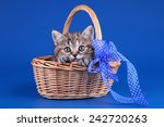 Stock photo kitten in a basket 242720263
