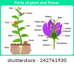 Leaning Parts Of Plant And...
