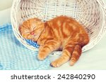 Stock photo cute red kitten sleeping in a basket 242840290