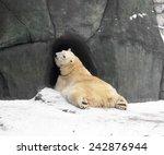 Polar Bear At Entrance To Cave