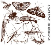 set of detailed vector insects... | Shutterstock .eps vector #242912479