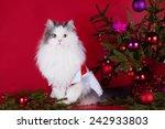 Cat In Fancy Dress Near...