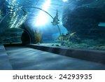 Tourist In Big Aquarium