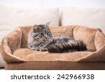 Cute Cat Is Lying In His Cat...