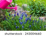 Spring Works In The Garden ...