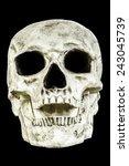 a human skull head isolated on...   Shutterstock . vector #243045739