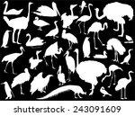 Illustration With Birds...