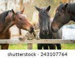 Stock photo three horses and cat 243107764