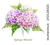 Hydrangea  Watercolor  Flowers...
