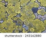 Lichens On Stone Texture ...