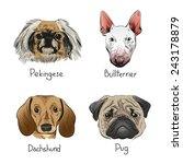 set of hand drawn dogs  vector... | Shutterstock .eps vector #243178879
