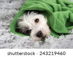cute white dog with black spots ... | Shutterstock . vector #243219460