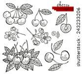 hand drawn decorative cherry...   Shutterstock .eps vector #243233206