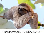 Happy sloth hanging on the tree