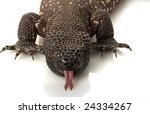 Mexican Beaded Lizard ...