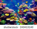 Coral Reef And Tropical Fish In ...