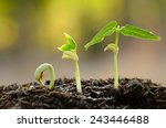Germinating Seed To Sprout Of...