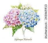 Watercolor  Hydrangea  Flowers  ...