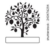 black lemon tree isolated on...   Shutterstock .eps vector #243476254
