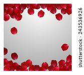 Stock vector red rose petals valentine s card background 243536926