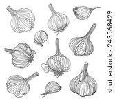 set of different garlic bulbs.... | Shutterstock .eps vector #243568429